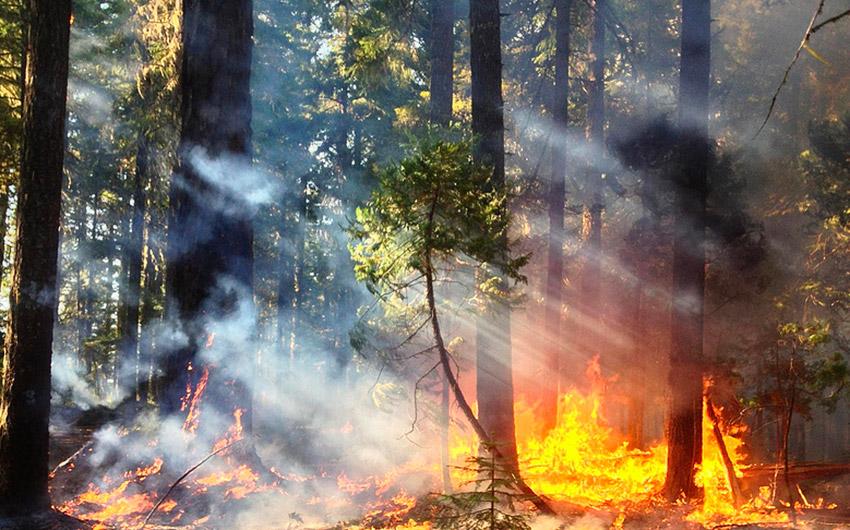 incendi-misura8psrcalabria-federazione-agronomi